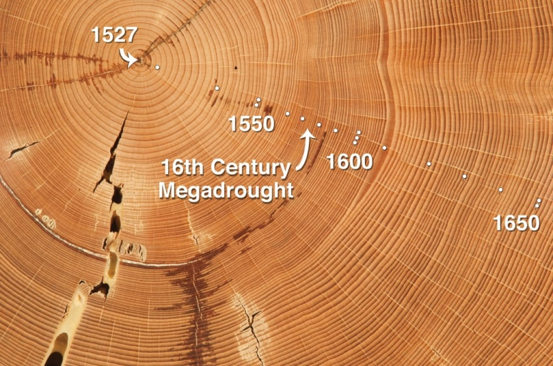 tree rings carbon dating Calibration curves the information from measurements on tree rings and other samples of known age (including speleothems, marine corals and samples from sedimentary records with independent.